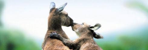 les-animaux-amoureux