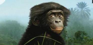 bonobos_film